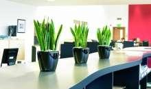 El motivo de este tremendo beneficio, según el estudio, es que la presencia de plantas verdes aumenta la participación laboral de los empleados. Foto:jardinplantas.com